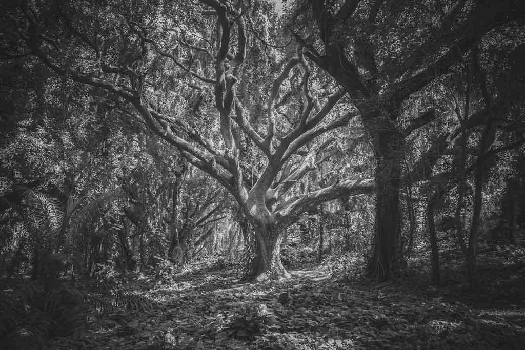 Zeigt einen Laubwald.