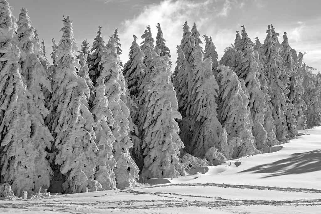 Zeigt einen Nadelwald im Winter